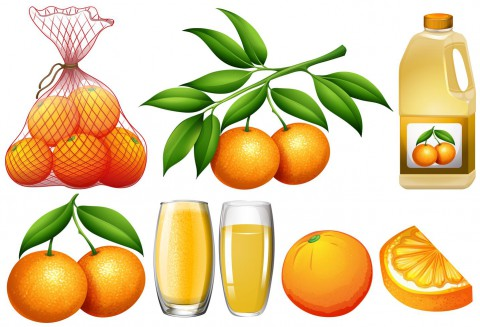 vector-oranges-and-orange-products